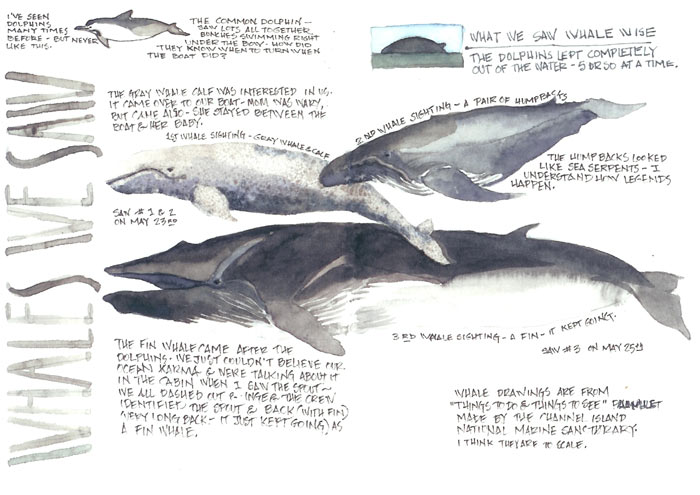 from Garrett gay whales